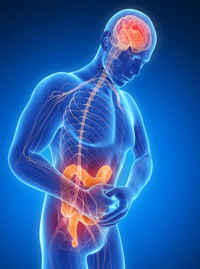 Problemi intestinali - Test Microbiota - Nutrizionistagenova.com